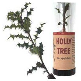 Holly Tree in a Tube