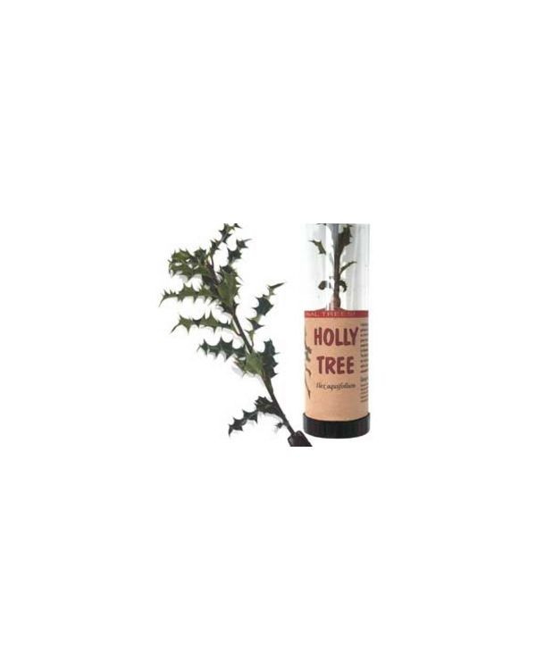 Holly Tree in a Tube
