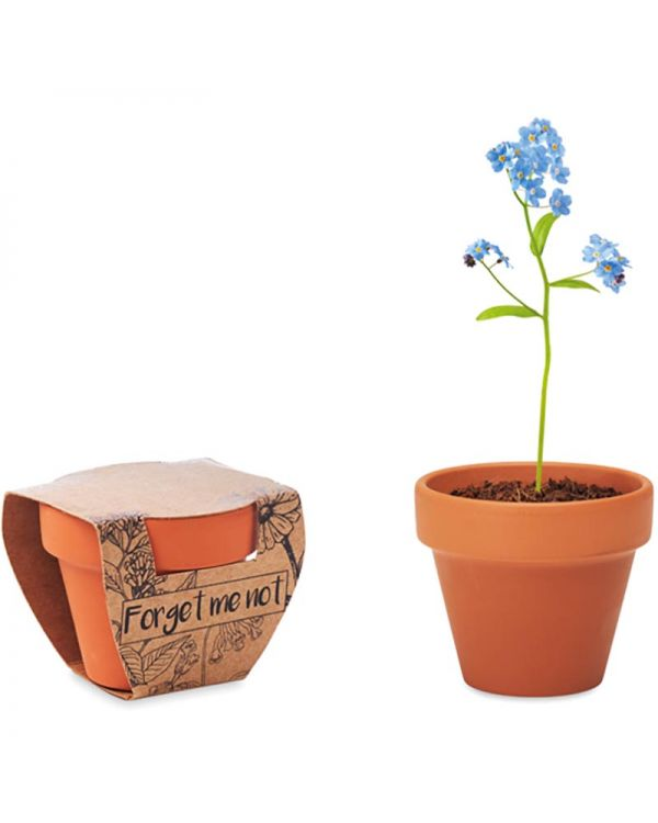 Forget Me Not Terracotta Pot 'Forget Me Not'