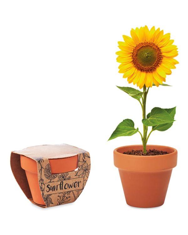 Sunflower Terracotta Pot 'sunflower'