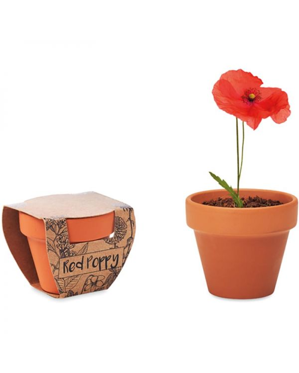 Red Poppy Terracotta Pot 'Poppy'